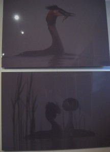 """Wystawa """"Kadry kreślone piórem"""" http://kultura.wielun.pl"""